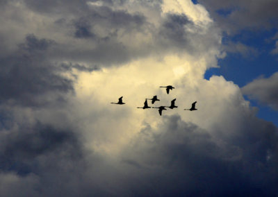 nature-birds-clouds